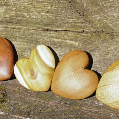 Od lewej: jabłoń, akacja, dąb, jesion